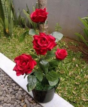 cara-menanam-bunga-mawar-dalam-pot.jpg