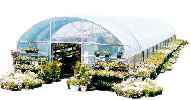 Greenhouse 8