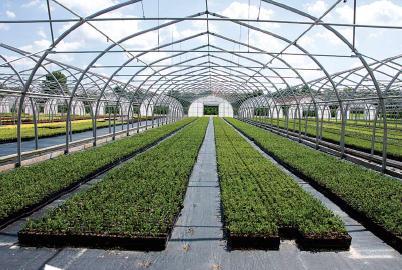 1-greenhouse-canada