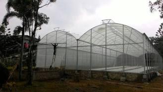 green-house-3