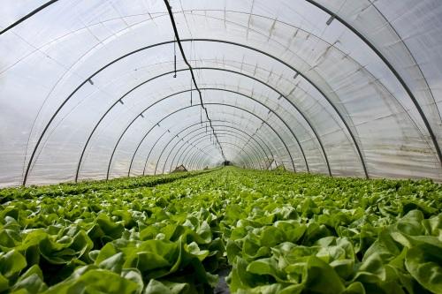 Plastik-UV-Greenhouse-Rumah-Pelindung-Hujan (1)