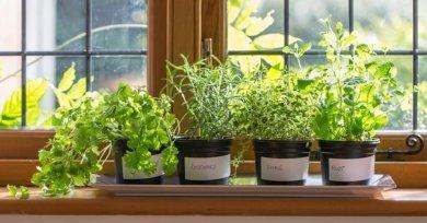 Kebun Sayur Sekaligus Penghias Ruangan